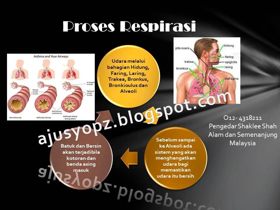 Proses Respirasi pada badan manusia